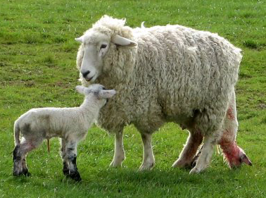 how wool is made